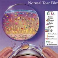תמונה 1. נוזל הדמעות התקין מכיל מרכיבים רבים החיוניים לשמירת בריאות הקרנית והלחמית.