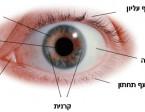 מבט חיצוני על העין