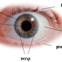 מבט חיצוני אל העין