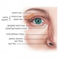 תמונה 5.מערכת  ייצור הדמעות, פיזורן וניקוזן.