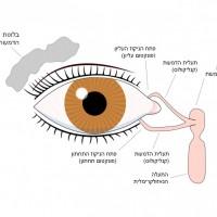 תמונה 6. מערכת ניקוז הדמעות.